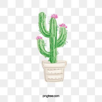 Photo of Cactus Png Plants – #cactus #plants – #Cactus#cactus #plants #png