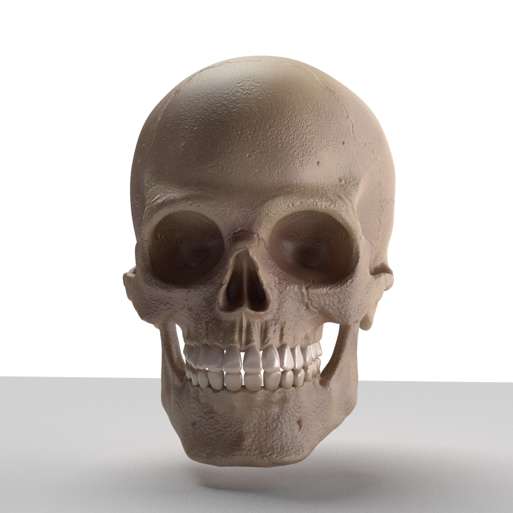 Skull 3d Model Download Royalty Free Anatomy Science Only - free 3d models skull