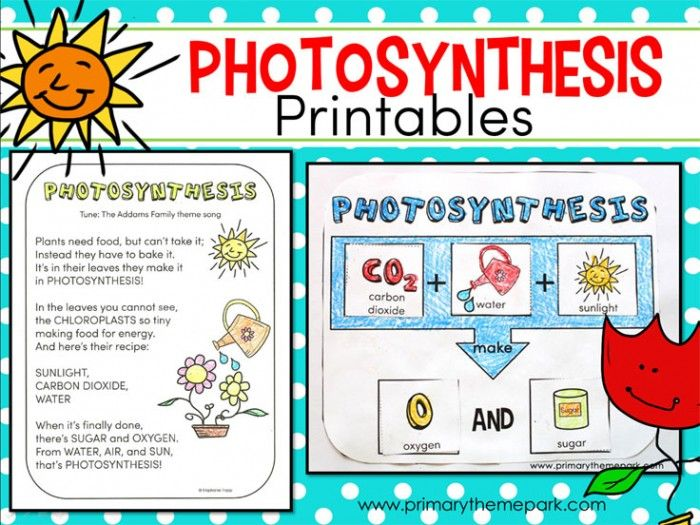 free photosynthesis for kids printable science resources for homeschoolers elementary. Black Bedroom Furniture Sets. Home Design Ideas