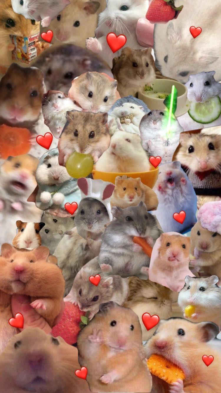 Hamster Wallpaper Cute Hamsters Hamster Wallpaper Funny Hamsters