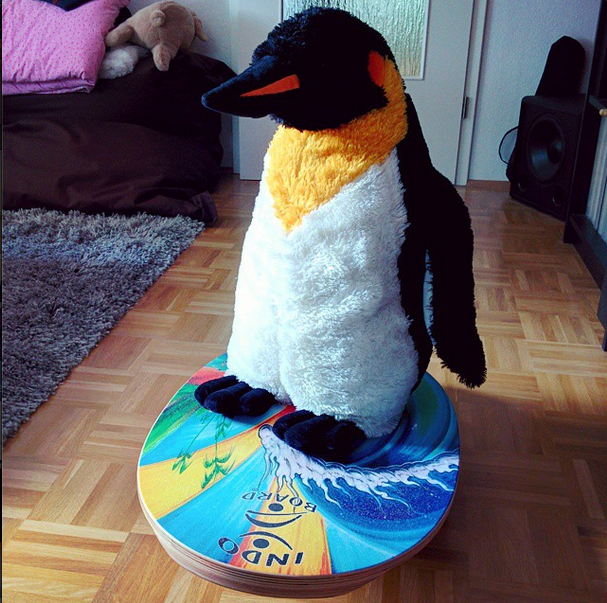 he's getting indo it: mr pungu is doing some tricks on his indo board! what are you up to today?  #penguin #penguins #pinguin #pinguine #pinguino #pinguinos #pinguim #pingouin #pingüino #ペンギン #пингвин #펭귄 #instabird #antarctica #stuffedanimal #pingu #penguinlove #pinguinito #montythepenguin #johnlewis #johnlewisadvert #montypenguin #monty #indoboard #indo