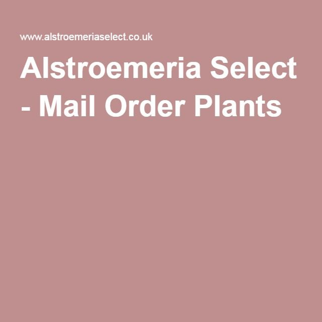 Alstroemeria Select Mail Order Plants