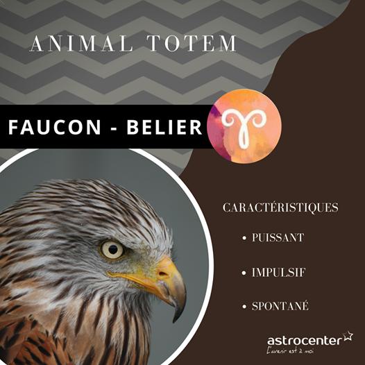 Animal Totem Decouvrez Le Votre Et Laissez Le Vous Guider