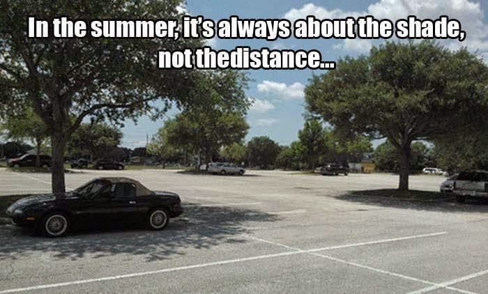 Florida Funny Funny Pictures Good Morning Funny