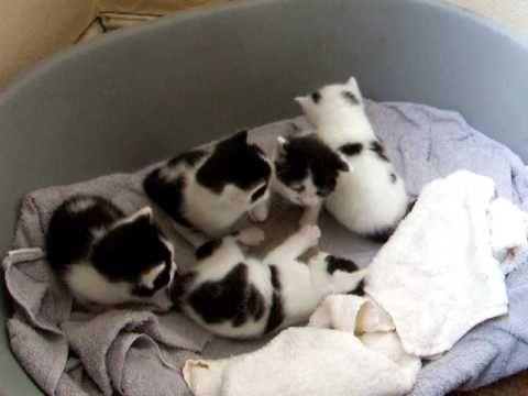 Unbearable kitten cuteness