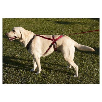 Ultra Paws One Harness For Dogs Extra Large Variation Parent