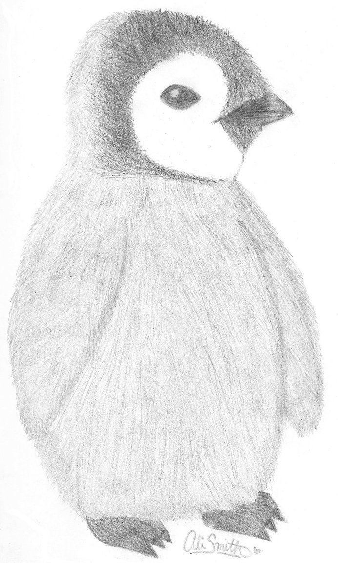 Картинки пингвинов карандашом