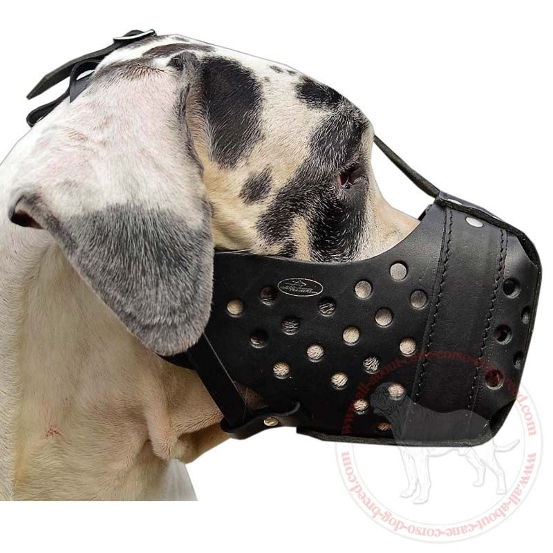 Most Durable Agitation Leather Dog Muzzle For Distinguished