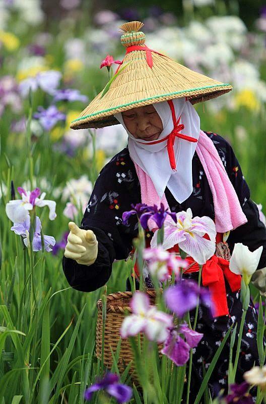 Picking Iris petals, Ibaraki, Japan