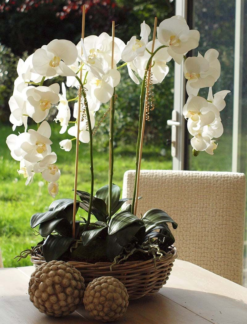 Orchids in a shallow basket bowl  arreglos florales