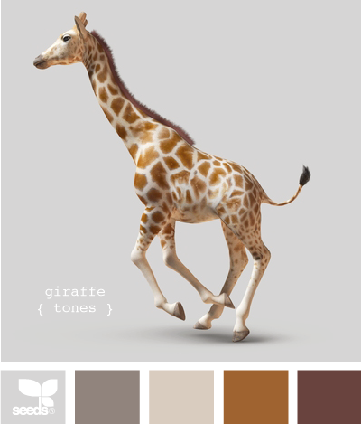 Obviously going to be a color palette of a room when we get a ...