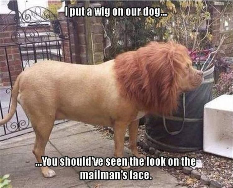 Afternoon Funny Animal Picture Dump 26 Pics #funnyanimalpictures