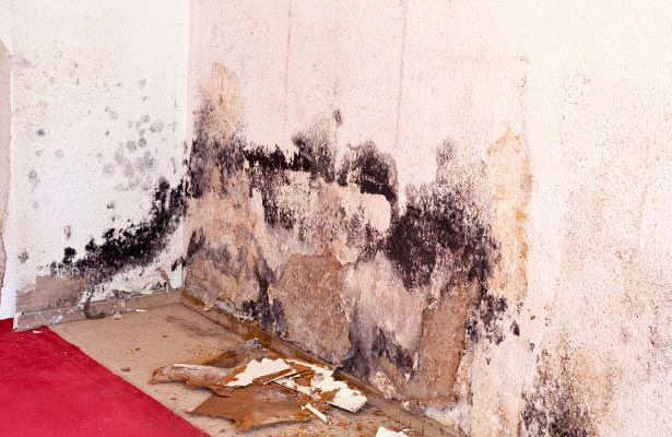 Pictures Of Types Mold In Houses