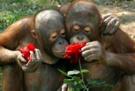 Valentine Monkeys