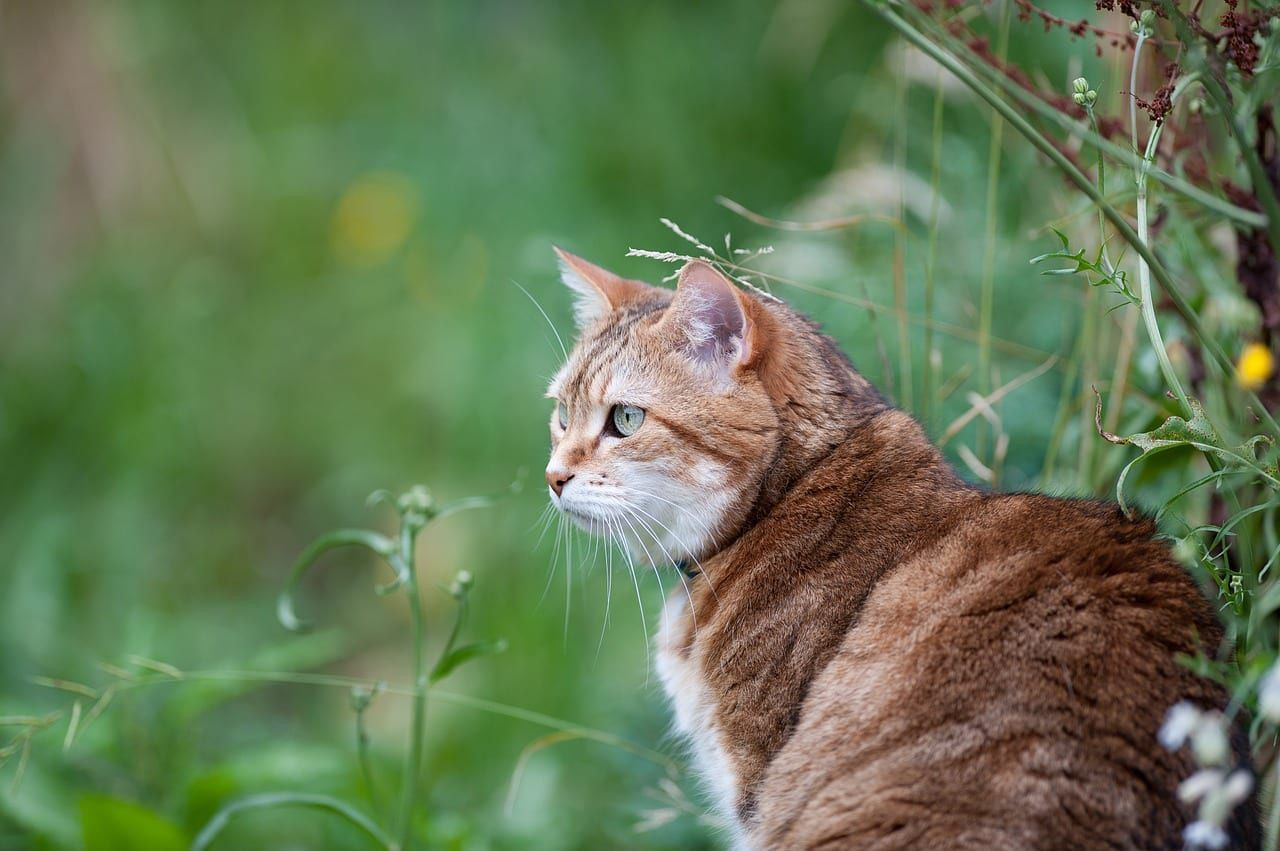 What To Do If Your Indoor Cat Gets Outside Cats Outside Indoor Cat Cat Parenting
