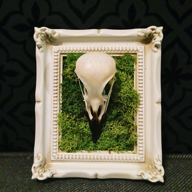English Magpie Crow Skull Baroque Frame, Taxidermy, Bird Taxidermy ...