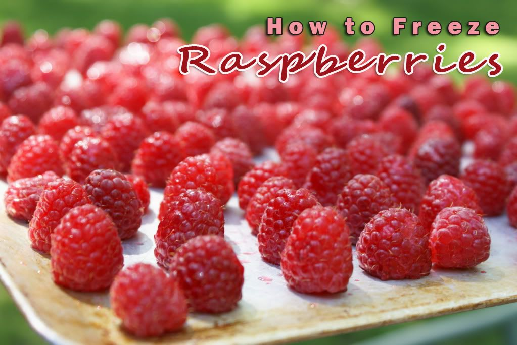 How to Freeze Raspberries + a delicious Raspberry Coffee Cake recipe | 5DollarDinners.com