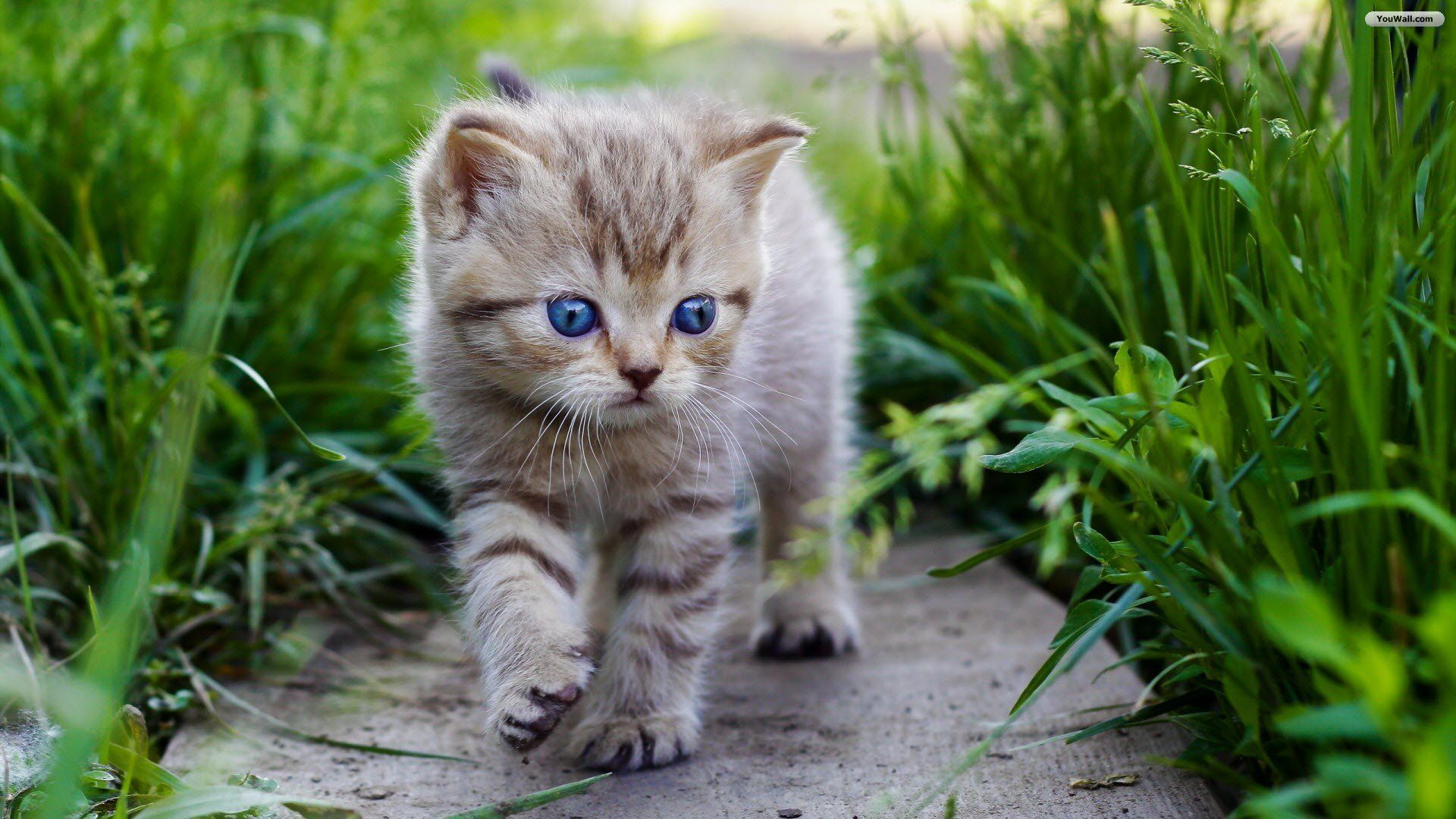 Youwall Lovely Cat Puppy Wallpaper Wallpaper Wallpapers Free