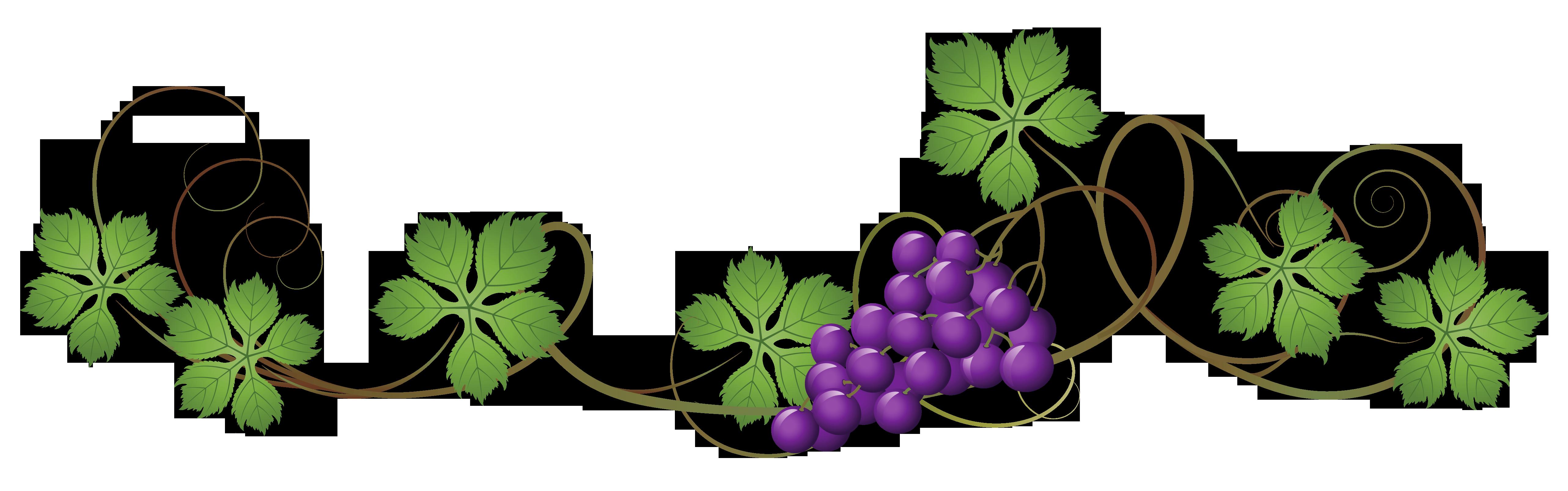 Vine Decoration Png Clipart Picture Png 5130 1608 Vine Decoration Clip Art Clip Art Borders