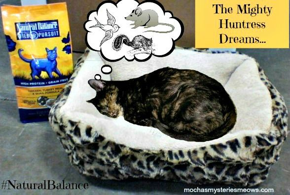 Melissa's Mochas, Mysteries and Meows: The Mighty Huntress Dreams... #NaturalBalance