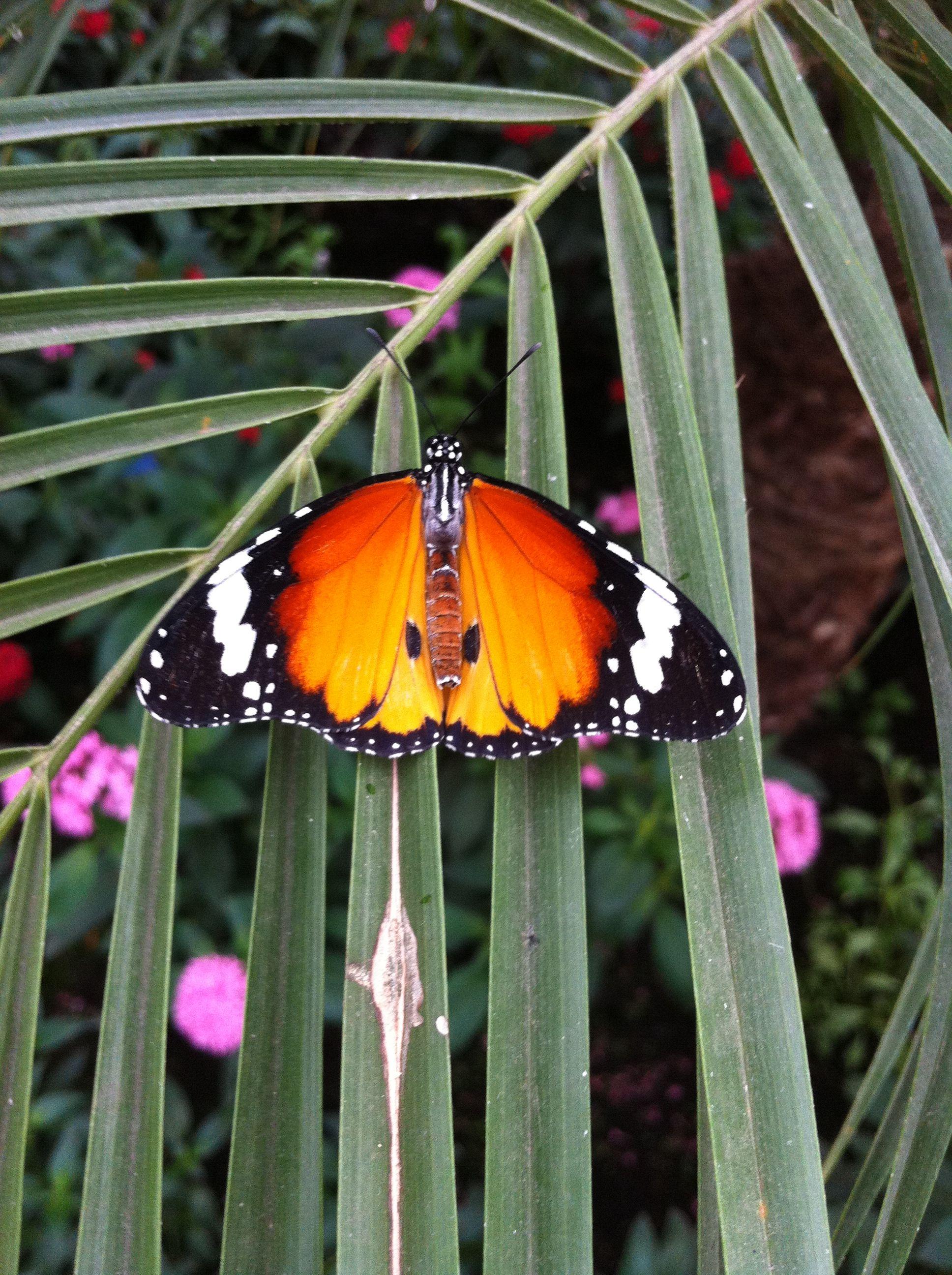 Butterflies in London!