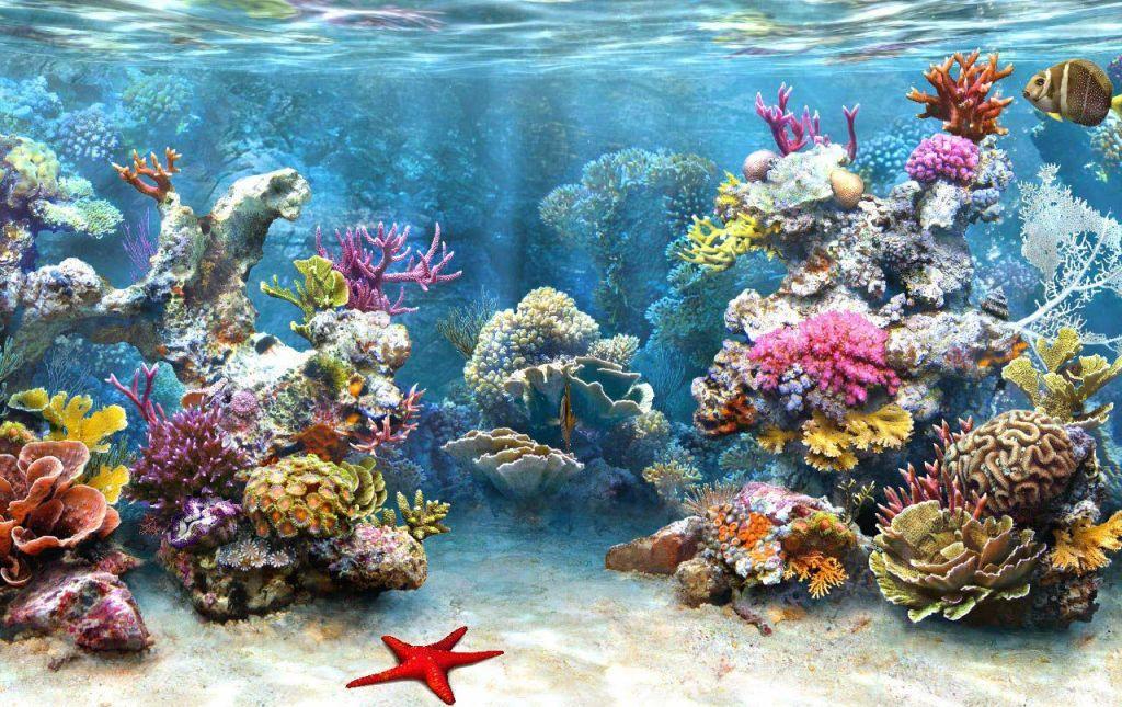 d Underwater Wallpapers For Desktop