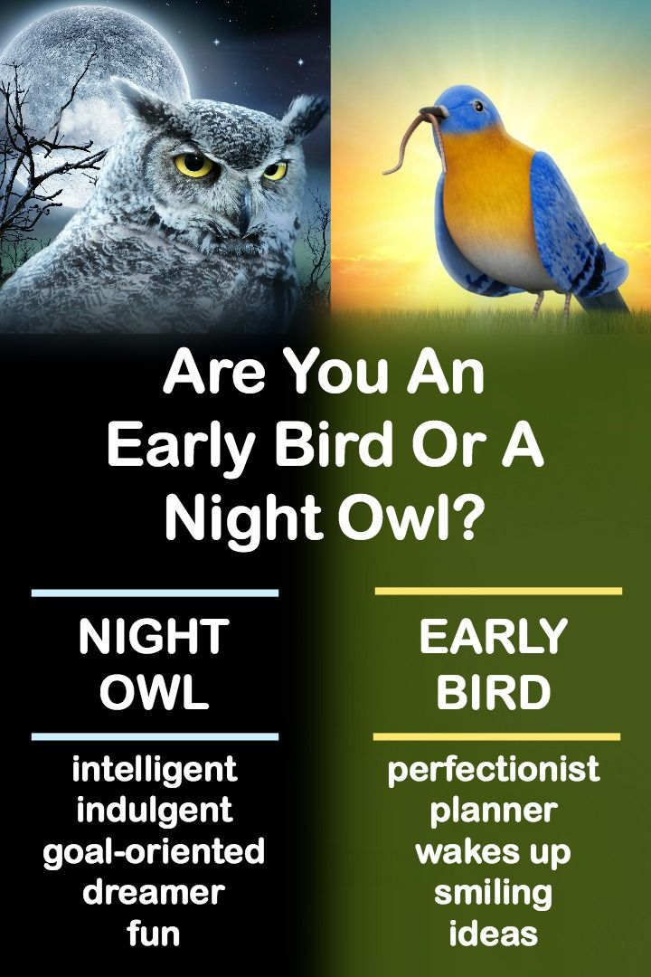 "early bird night owl essay The early bird versus night owl debate is an old one the early bird has been  lauded for centuries after all, they ""get the worm"" and are ""healthy, wealthy, and ."