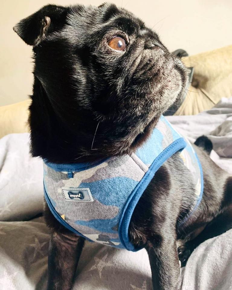 Puppia Blue Camo Harness Jacket Available At Www Ilovepugs Co Uk