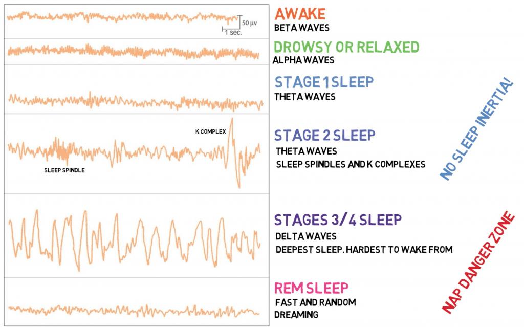 Image Result For Stages Of Sleep Mcat Stages Of Sleep Mcat Sleep