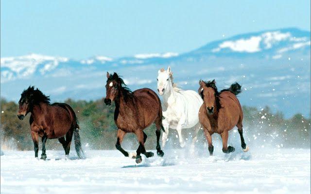 Photos Of Appaloosa Horses Runing On Beach