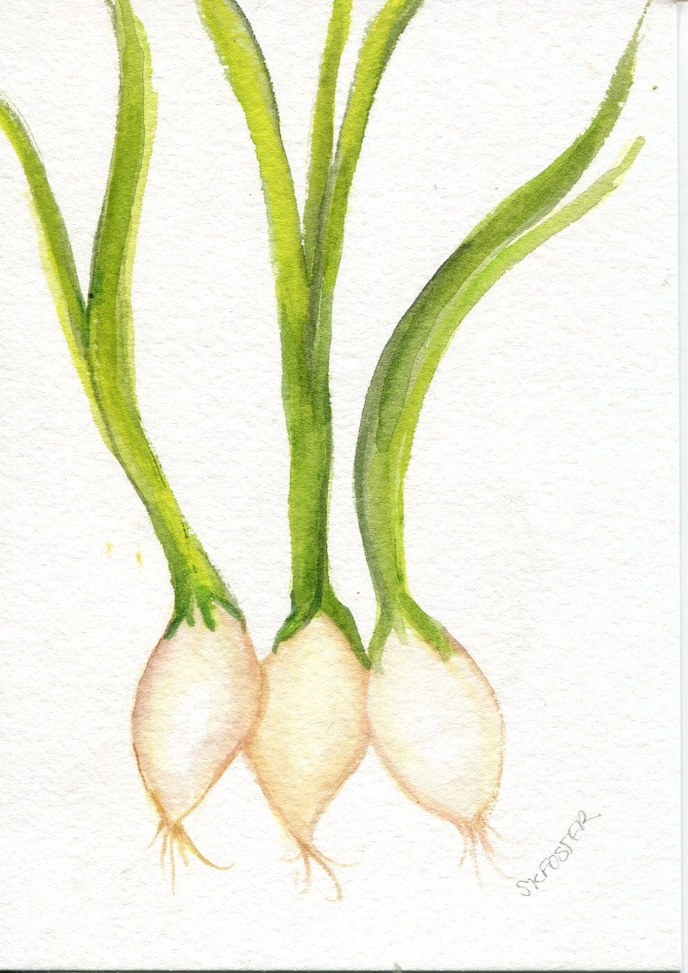 Green Onions Watercolor Painting Original Vegetable Kitchen Decor