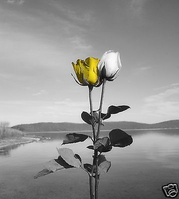Gray Yellow Rose Lake Wall Art Home Decor Matted Picture