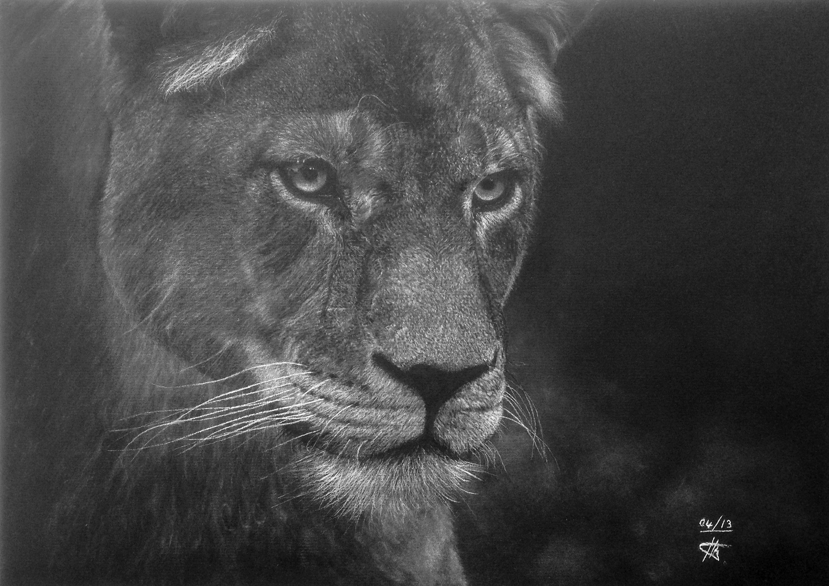 Mara la lionne dessin au crayon pastel blanc sur papier - Lionne dessin ...