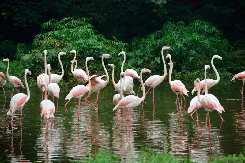 Guangzhou zoo 广州嚨物园 flickrllee_wu cc bynd 20