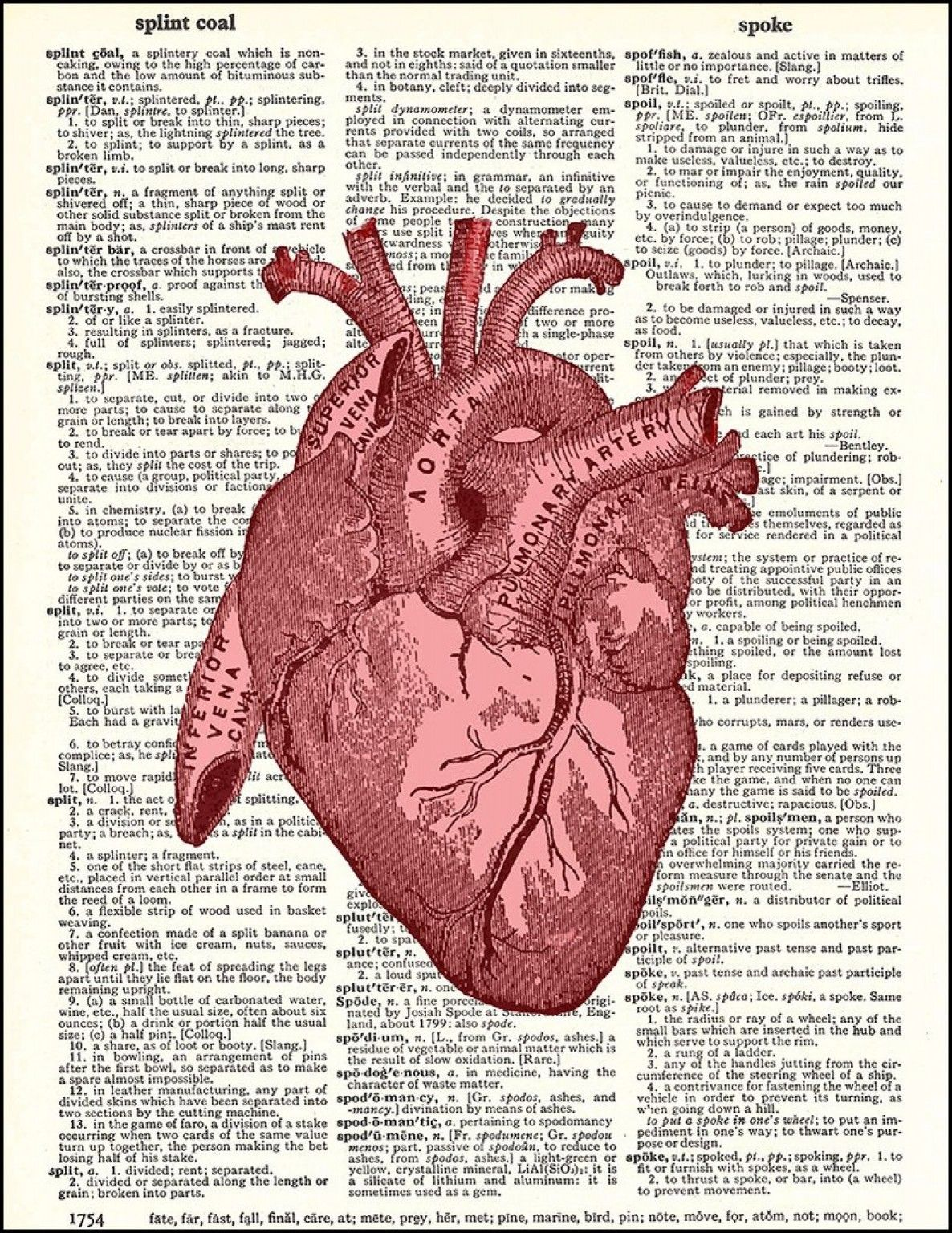 Heart Red Dictionary Print- this red human heart is printed on ...