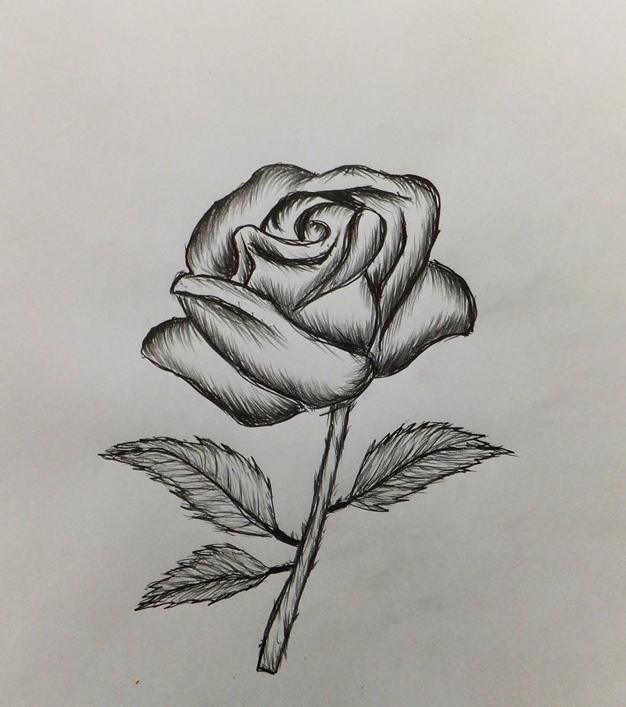 Easy Drawings Of Roses How To Draw A RoseEasy For