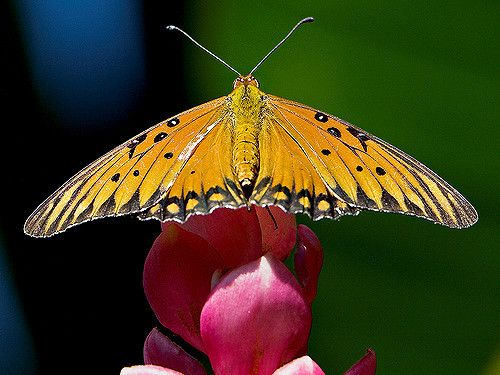Wings | Flickr - Photo Sharing!