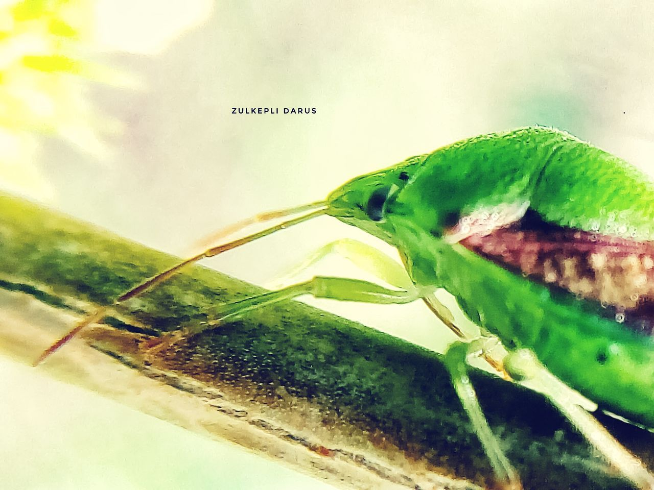 Green Color No People Animals In The Wild Animal Themes Insect One Animal Close Up Day Leaf Animal Wildlife Nature Animals Wild Animal Theme Close Up