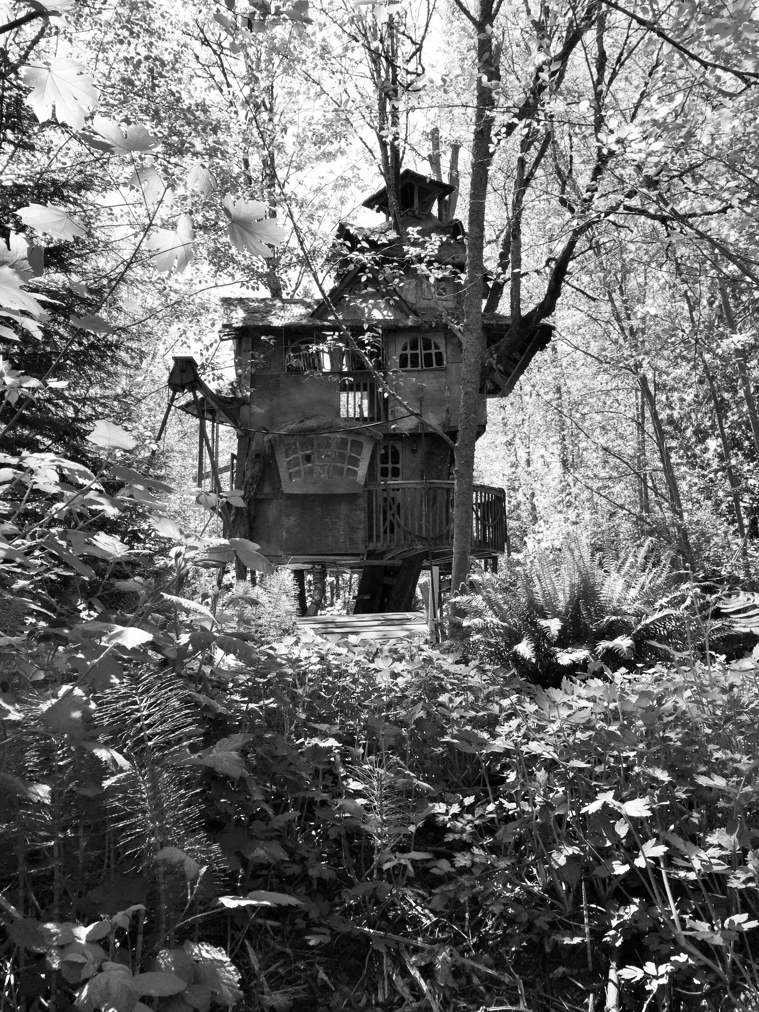 Redmond Abandoned Treehouse  Please Make Sure You Knock On