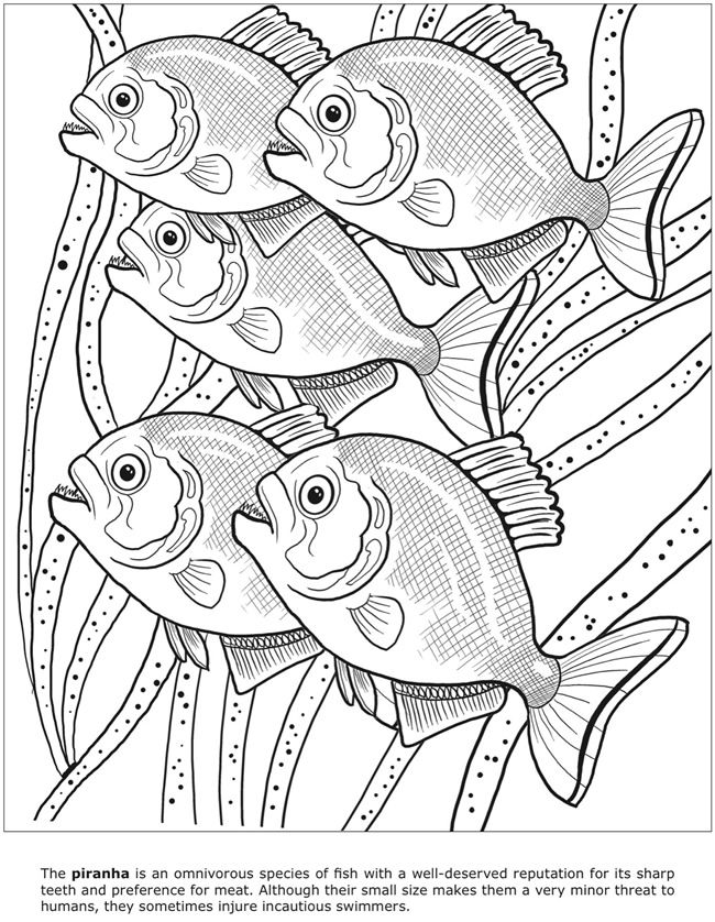 Welcome to Dover Publications - 3D Dangerous Animals ...