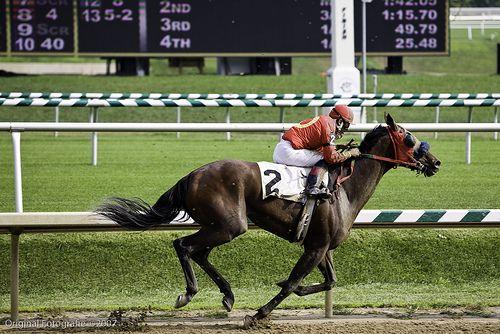 Horse betting tips applying getafe vs betis betting tips