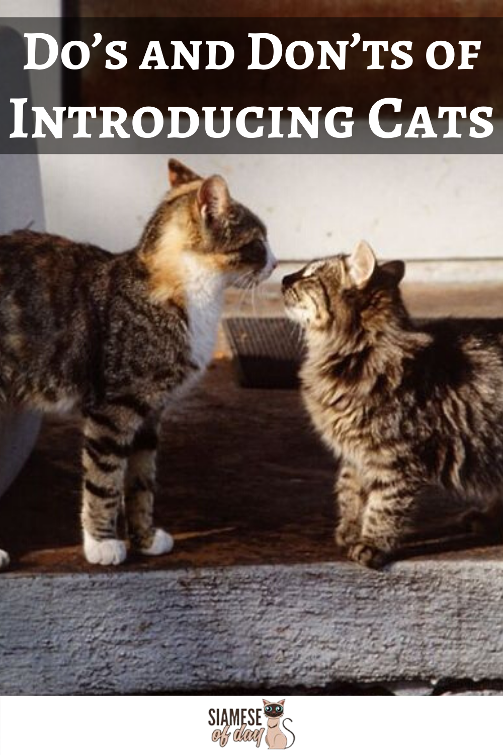 The Do S And Don Ts Of Introducing Cats Siamese Of Day In 2020 Cat Parenting Kitten Care Cats