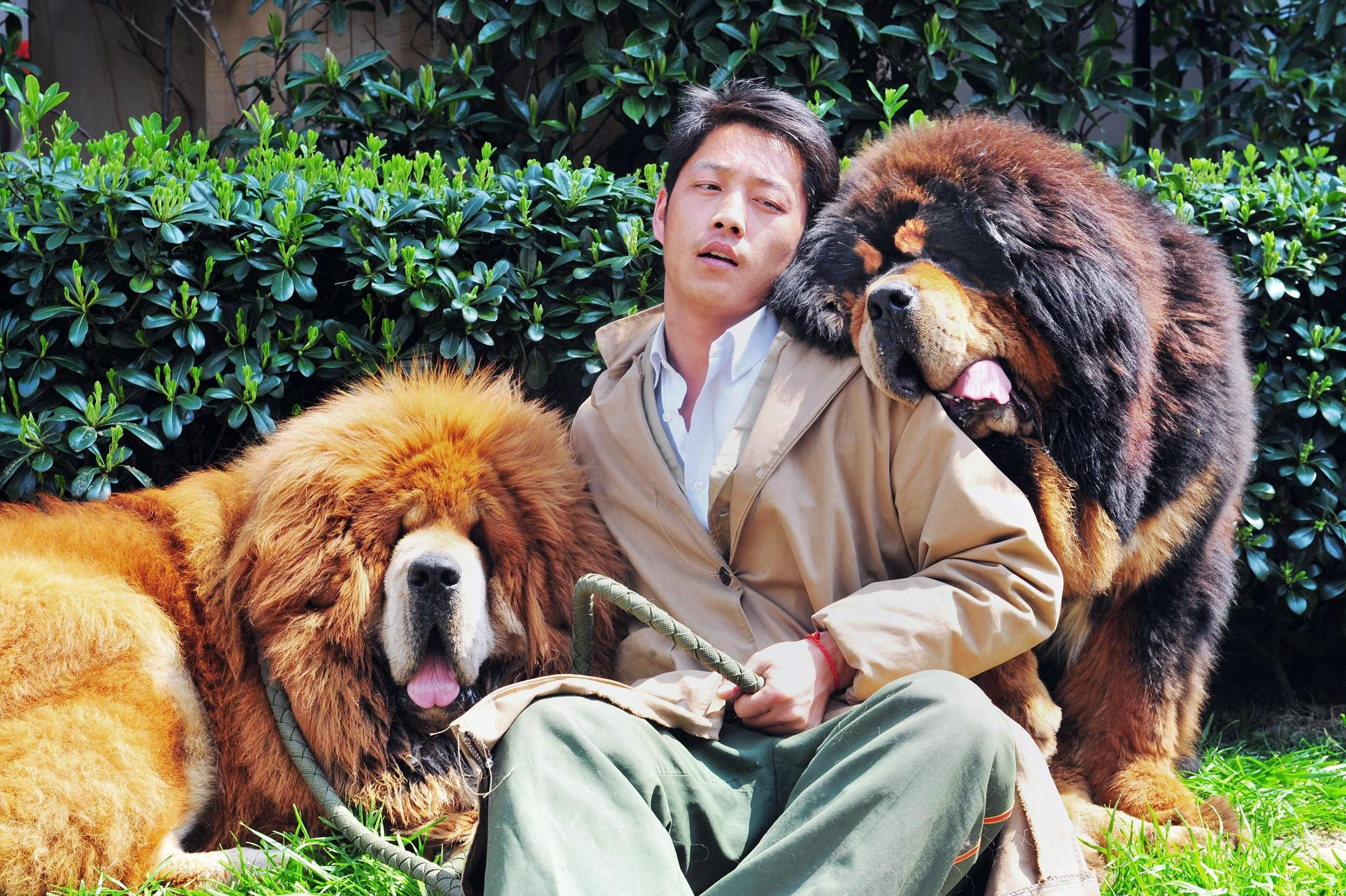 How much is that doggy in the window a shaggy 2 million