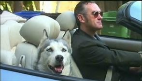 husky with morrissey