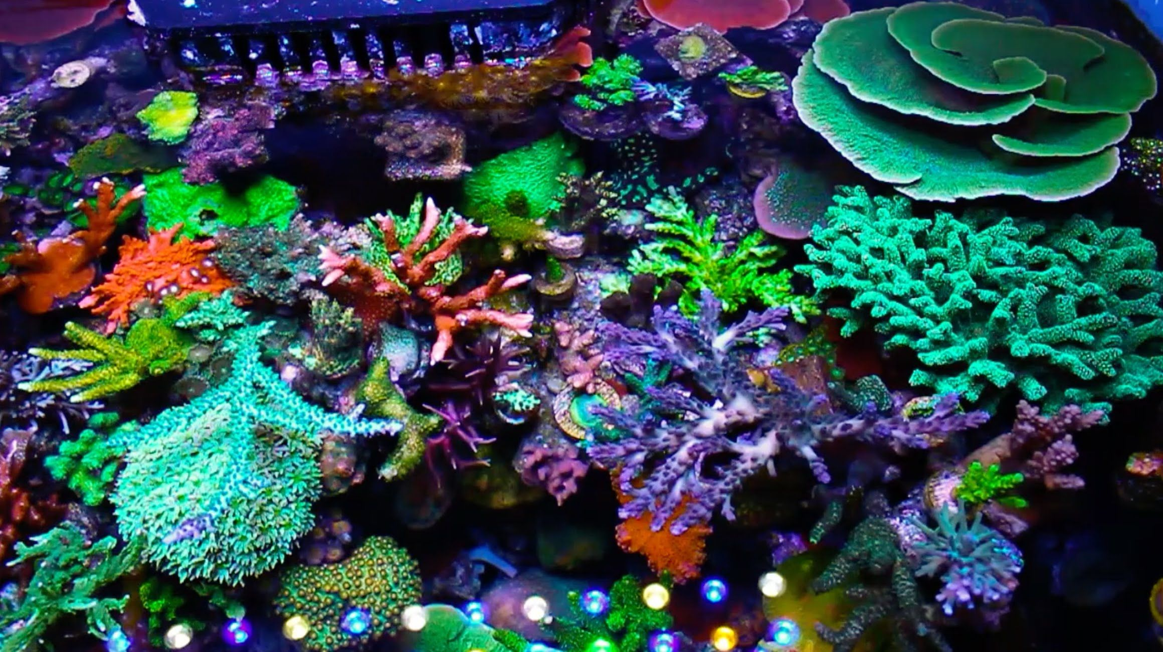 Hernan chaves 75 gallon reef tank reef lounge usa elos for Reef tank fish