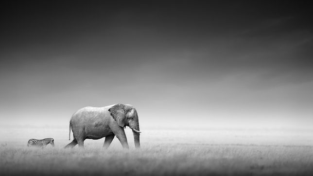 14 stunning portraits show the beauty of black and white wildlife photography | MNN - Mother Nature Network
