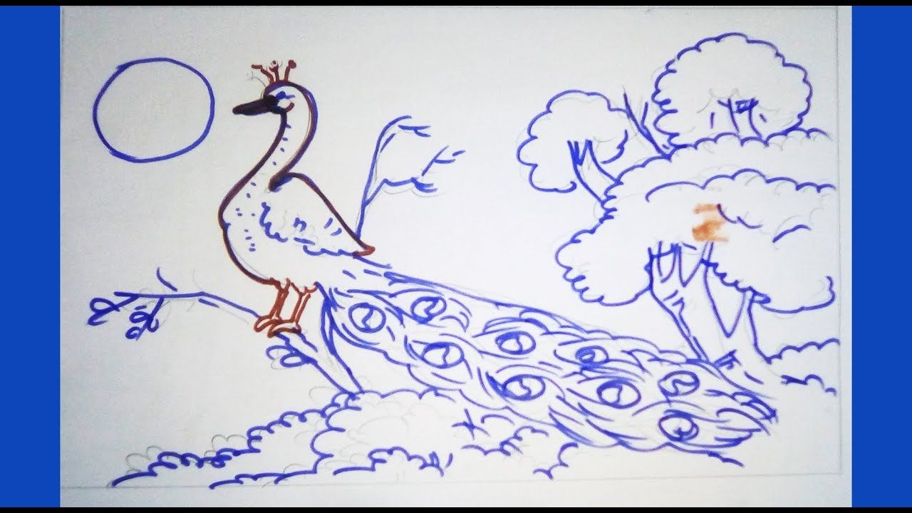 How To Draw Scenery With Peacock Very Simple Drawings Scener