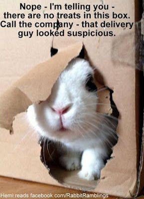 Rabbit Ramblings: Funny Bunny Memes | Funny rabbit, Cute ...