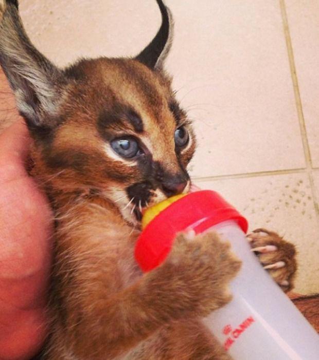 Entdecke Mit Uns Fotos Der Schonsten Katze Der Welt Katzenarten Katzen Bezaubernde Katzchen