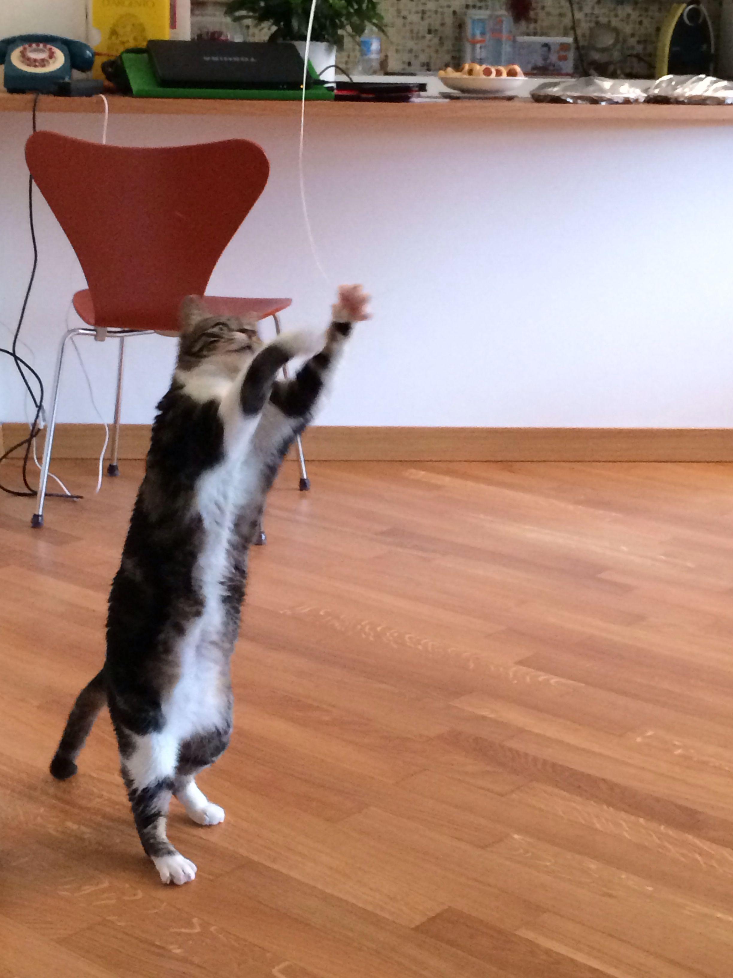 Arredamento gatti ~ Gatti pazzi gatti pazzi pinterest gatti pazzi pazzi e gatti